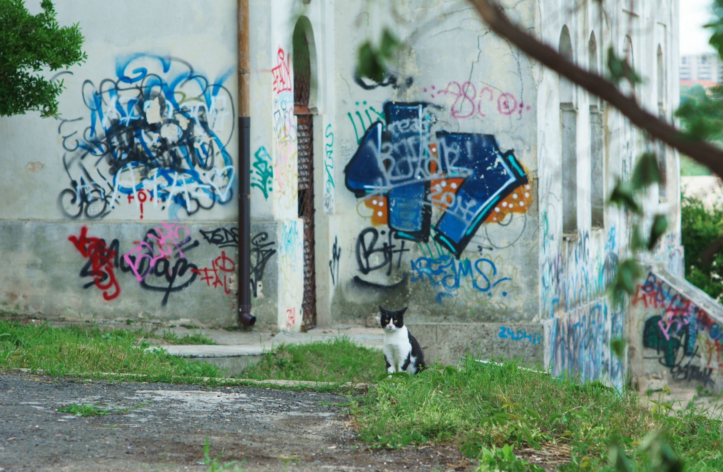 Graffiti Cat, Mangalia