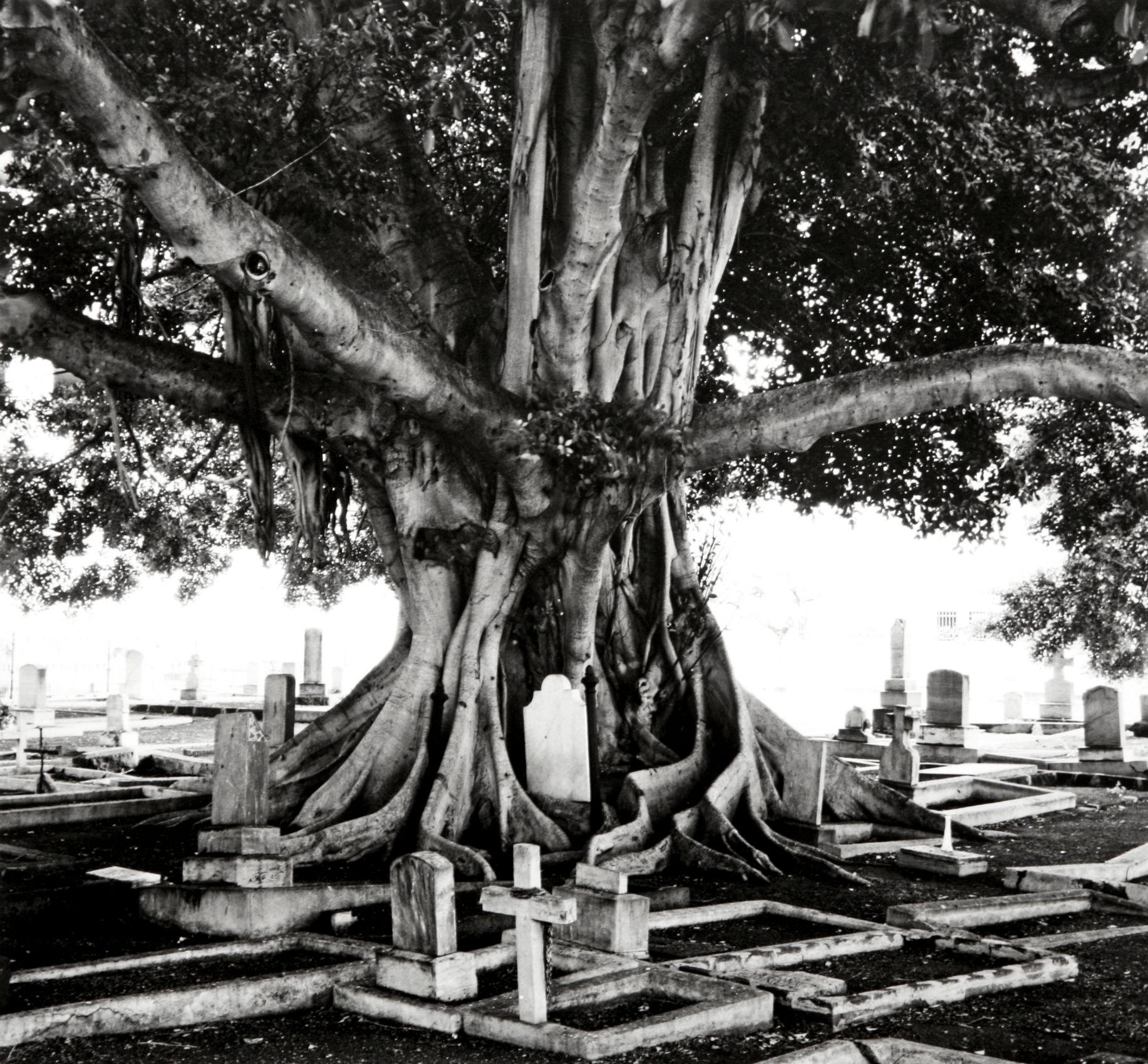 """Regeneration"", Catholic Cemetery, Honolulu, Oahu, Hawaii,  2005"