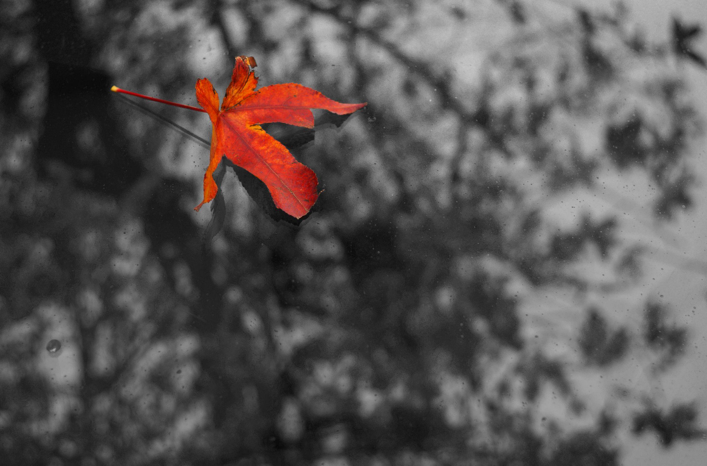 Fallen Leaf , San Francisco