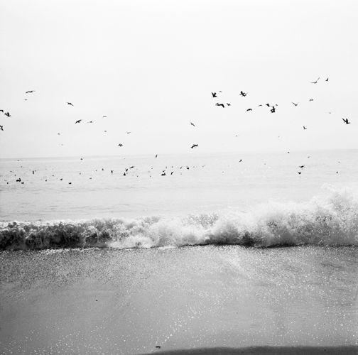 1049_hyw_1_pelicans_beach_surf_hearst_8_6_81___sw_edit_height_500px