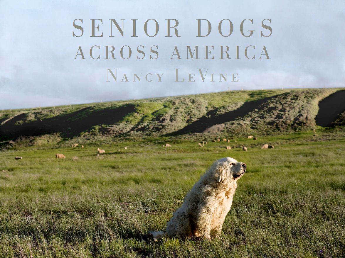 Cover Final_Senior Dogs Across America.jpg
