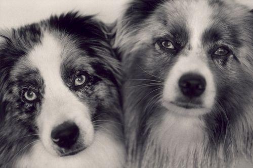 Maxie and Lulu  Washingtoj