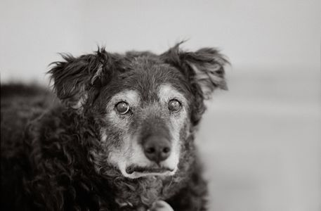 Curley 14 years old Kanab, Utah Best Friends Animal Society