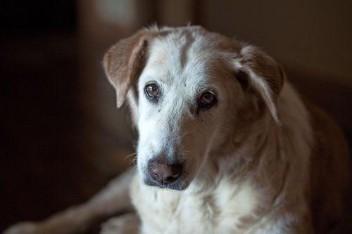 Sammy 16.5 years old  Aurora, Oregon
