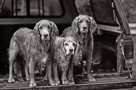 Chauncey 12 years old (middle) Daughter Sailor Girl (left) Ready Girl (right) 6 years old   Juneau, Alaska
