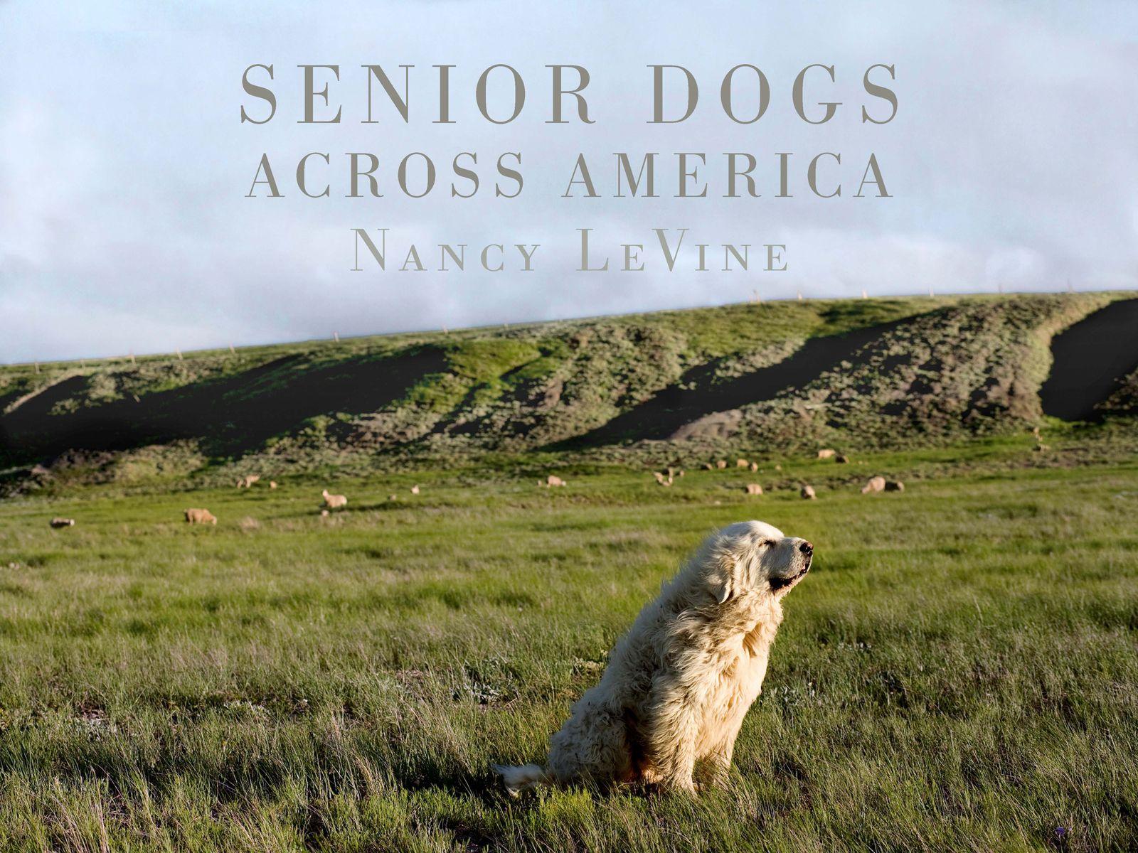 Senior Dogs Across America Photo Book