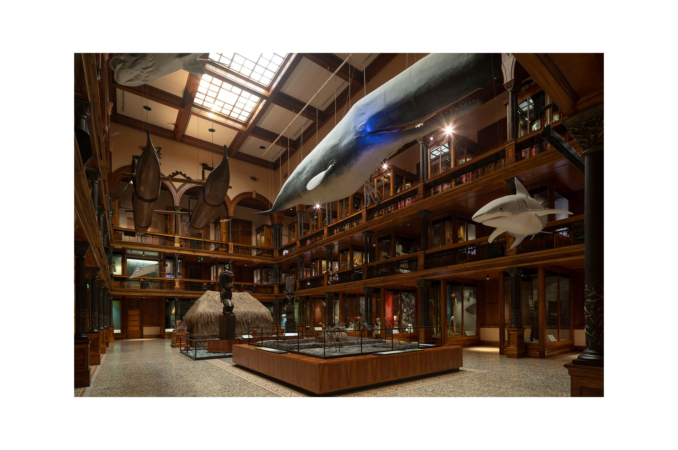 NEWLIVEBOOKS-BishopMuseum2.jpg