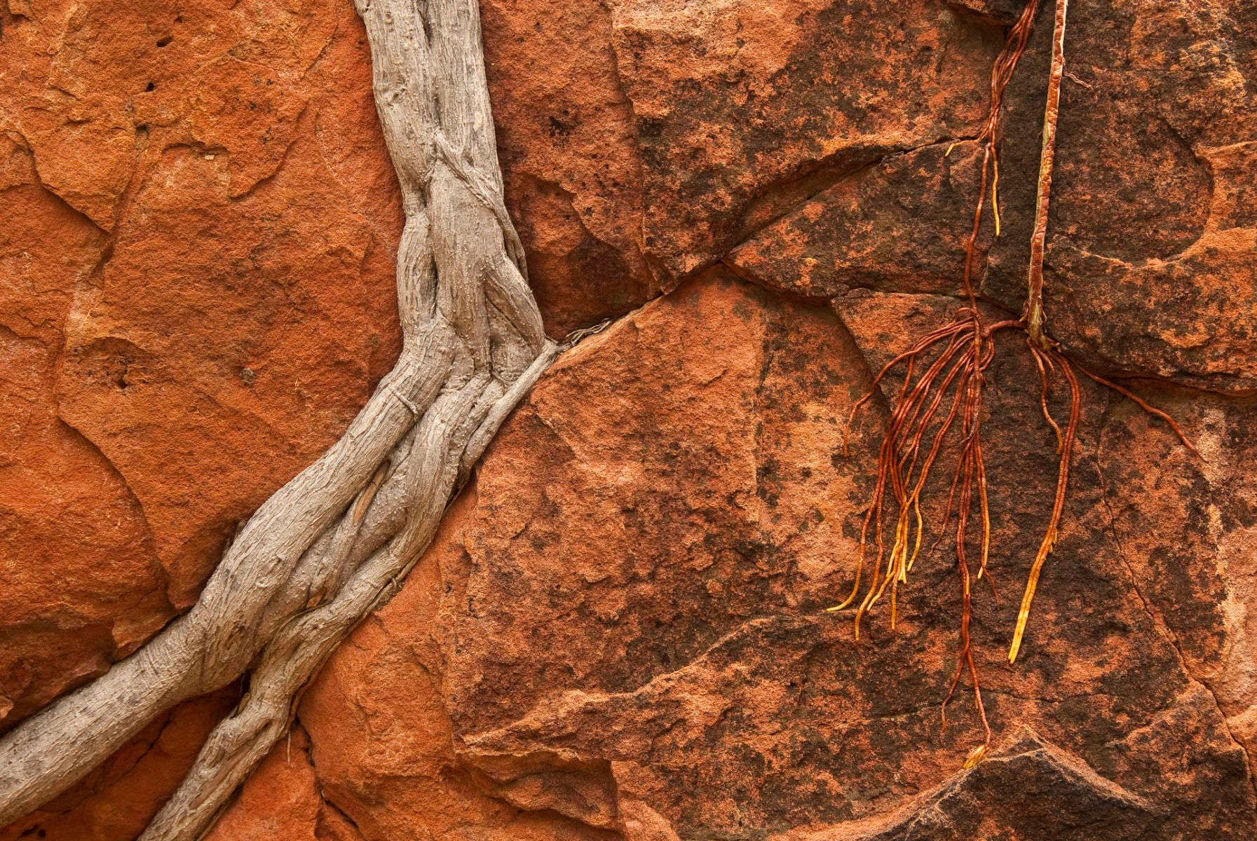 1roots_and_rock__dsc0202.jpg