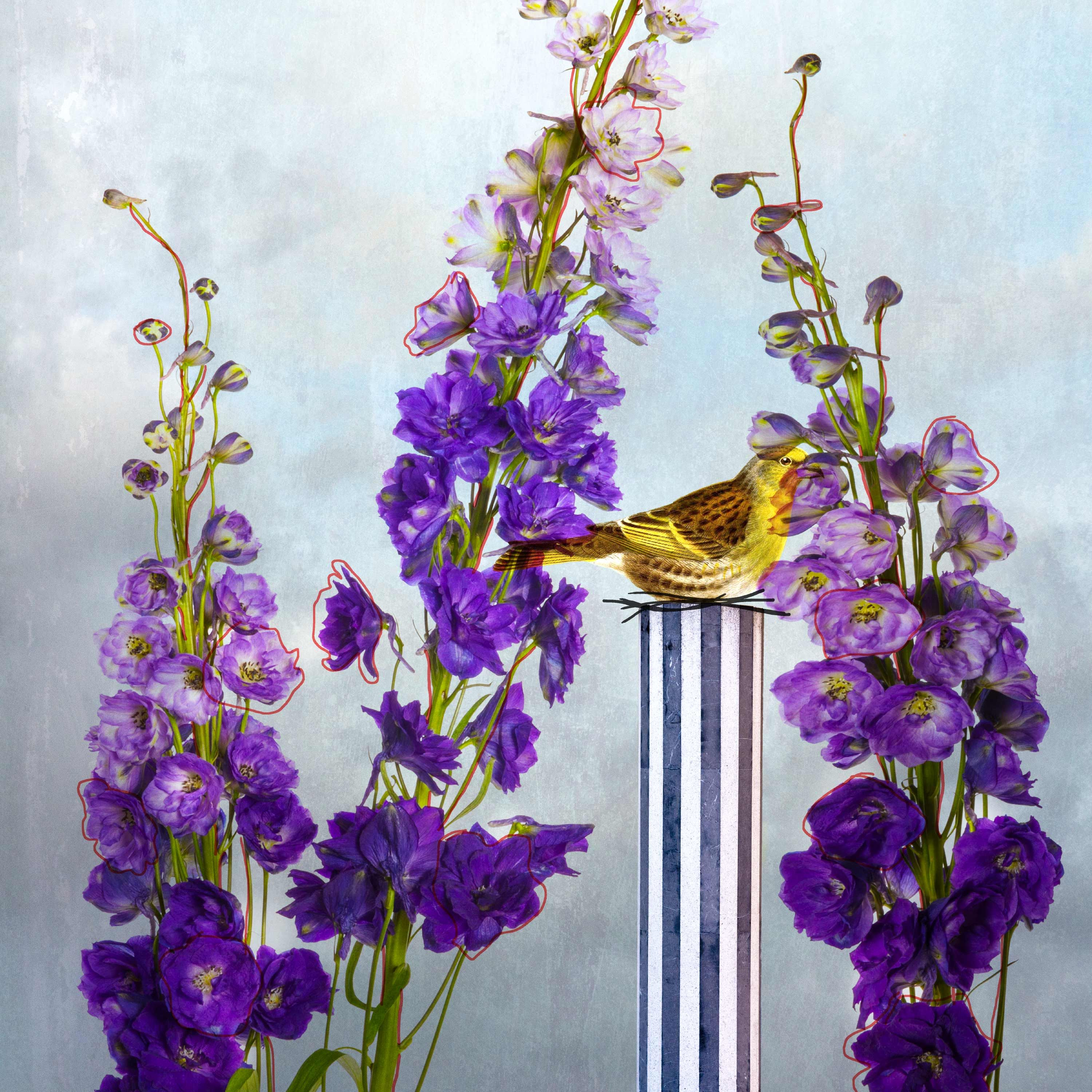 BlueDelphinium_website.jpg