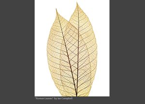 KOREAN_LEAVES_2020.jpg