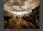 Horses-2.jpg