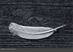 FEATHER_2020.jpg
