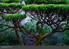 Yuan_Gardens-2.jpg