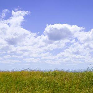 1Sea_Grass