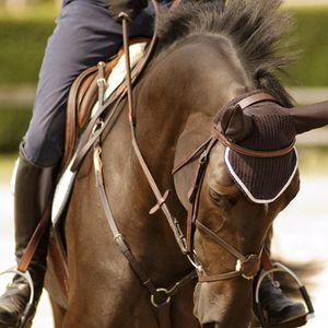 1Equestrian_08