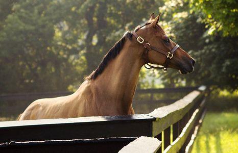 1Equestrian_39b