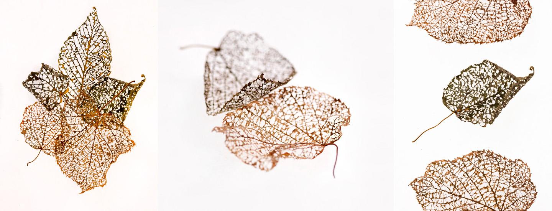 LeafBones2.jpg