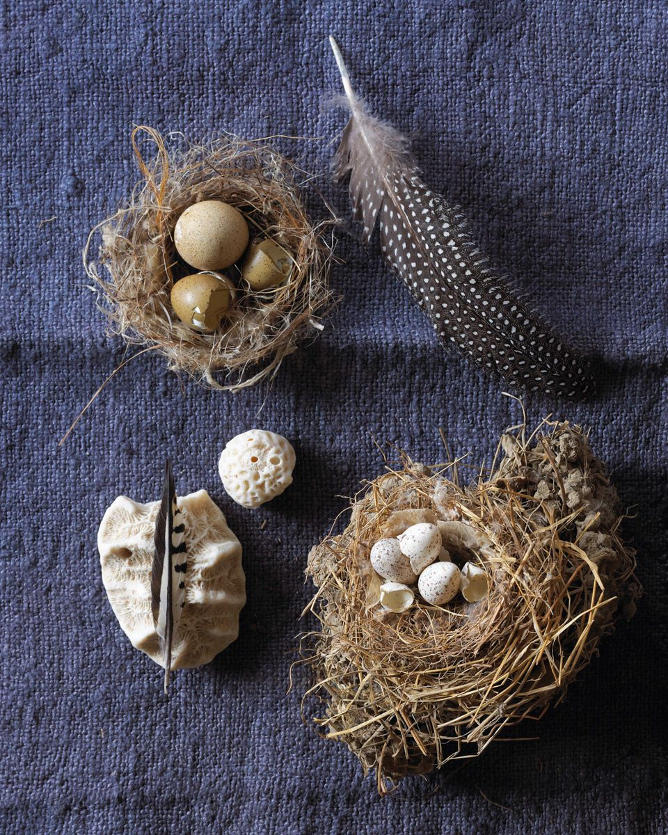 1egg_and_feather_still_life_dasha_wright_still_life_photographer
