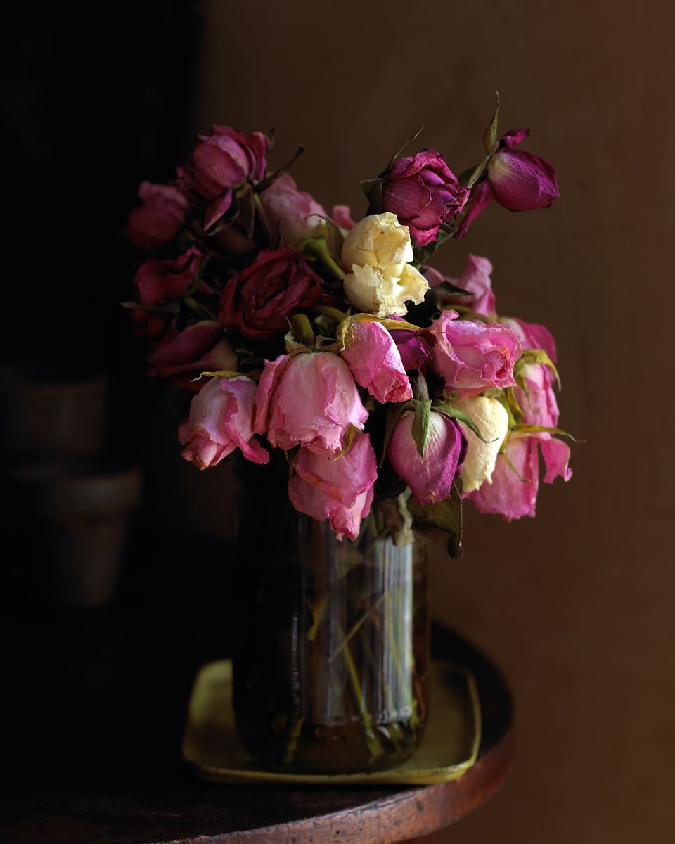1dead_roses_dasha_wright_still_life_photographer