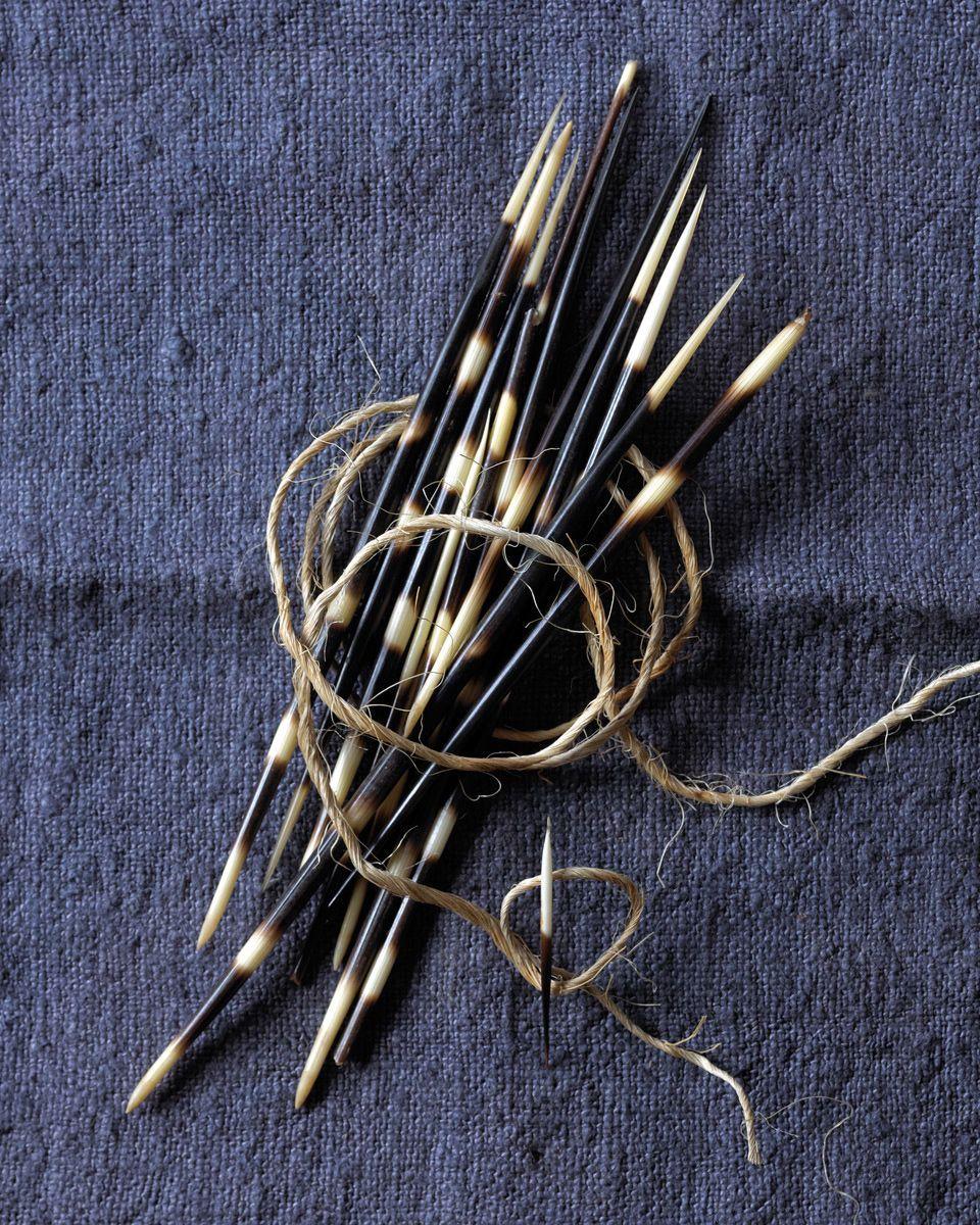 1porcupine_needles