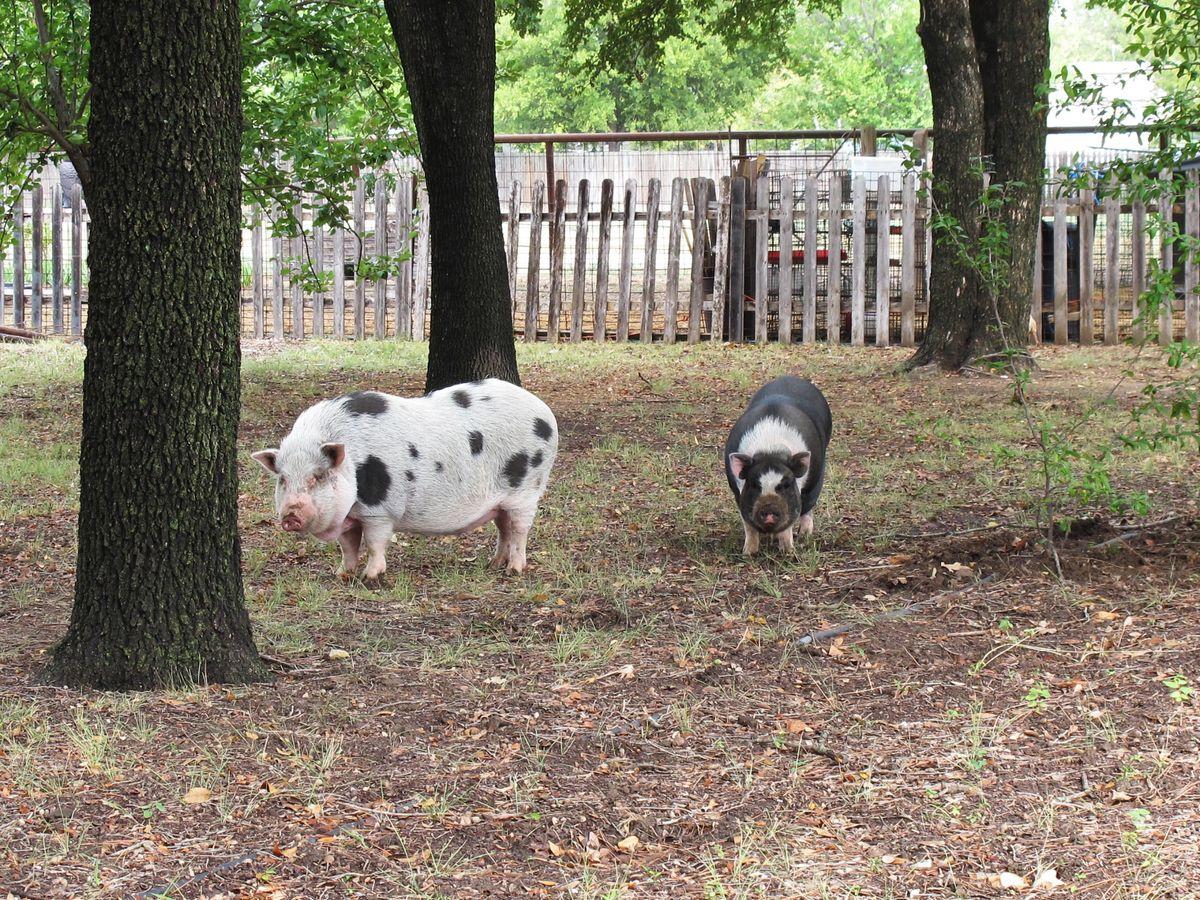 Jackie's Farm Photo Shoot Location 53.jpg