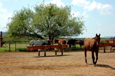 1r14_animals_ranch_north_rio_vista_00.jpg