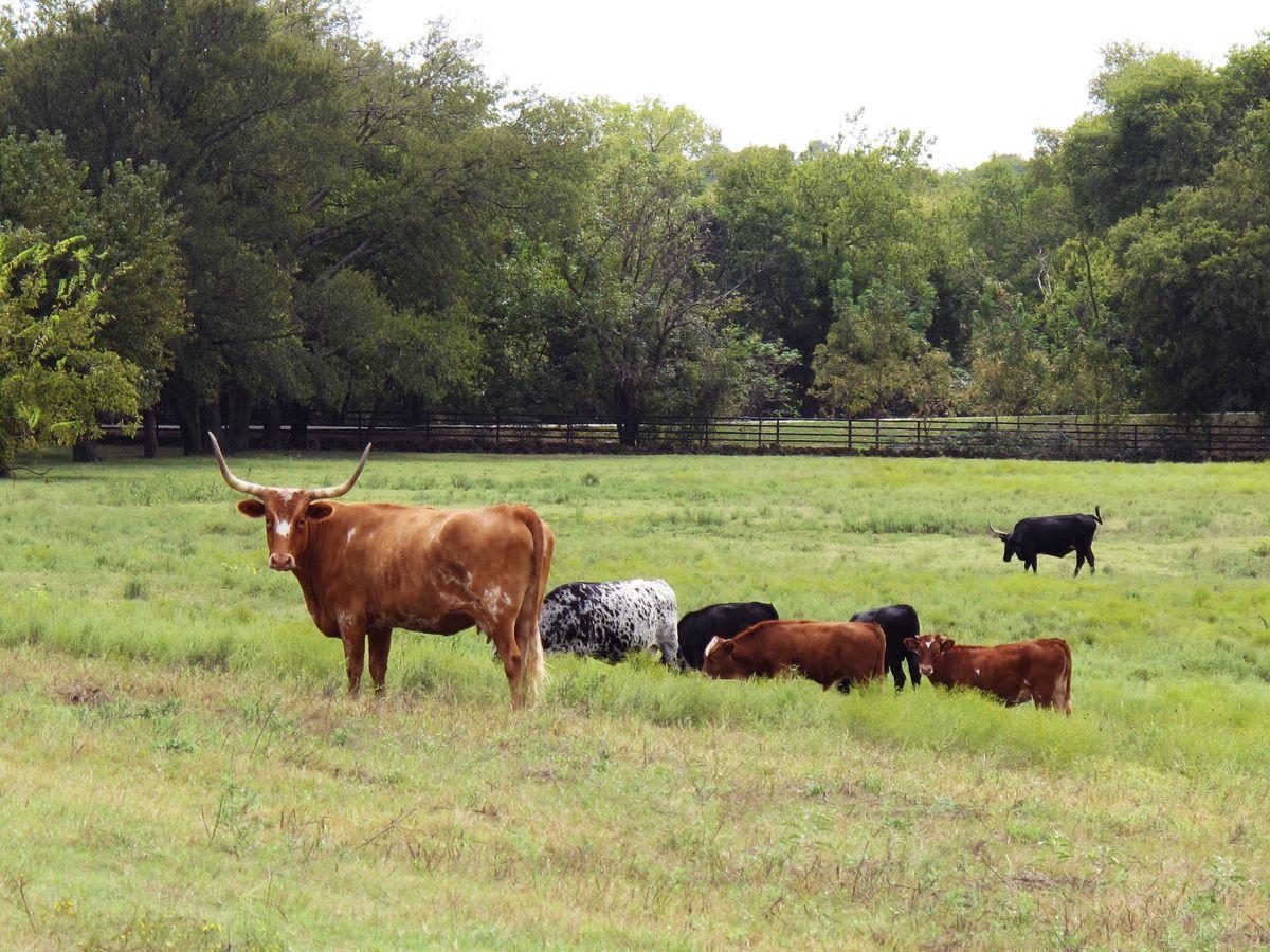 Jackie's Farm Photo Shoot Location 57.jpg