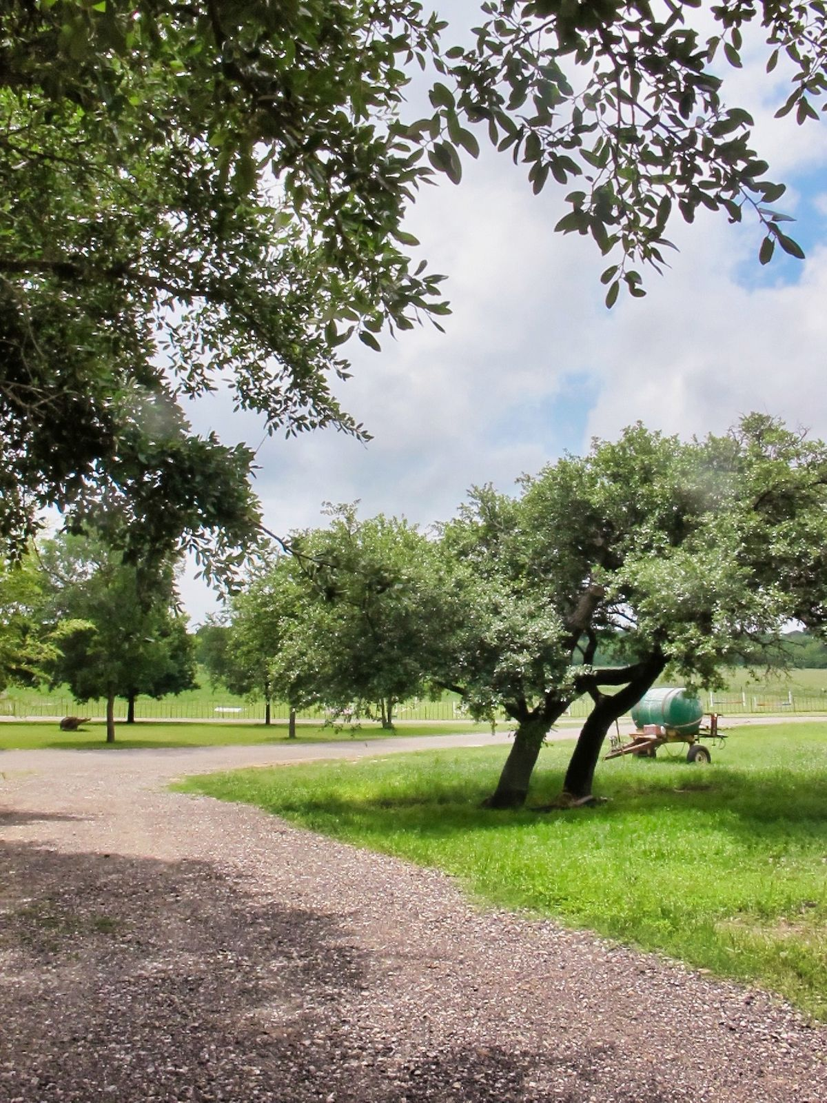 Liz Ranch Farms Ranches Photo Video Shoot Location Dallas 23.jpg