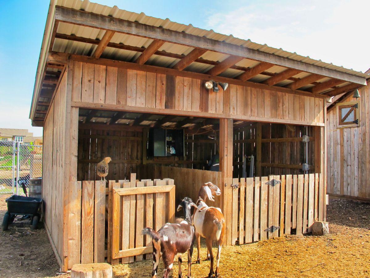 Bonton Farms Photo Video Shoot Location Dallas 23.jpeg