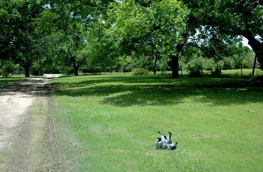 1r20_exterior_ranchhouse_gibbons_00.jpg
