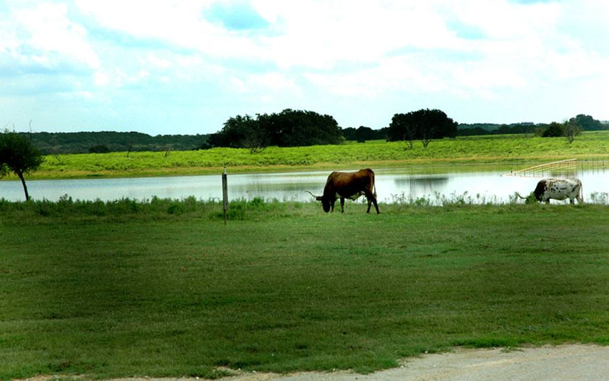 1r18_animals_ranch_north_rio_vista_00.jpg
