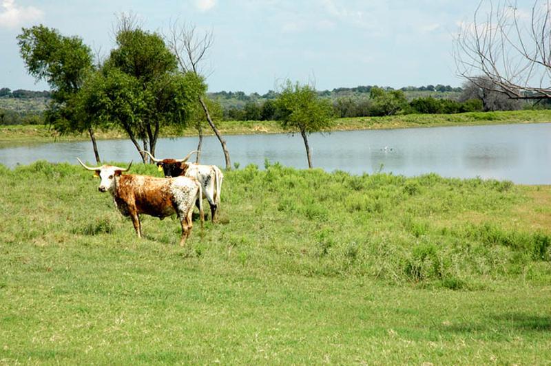 1r17_animals_ranch_north_rio_vista_00.jpg