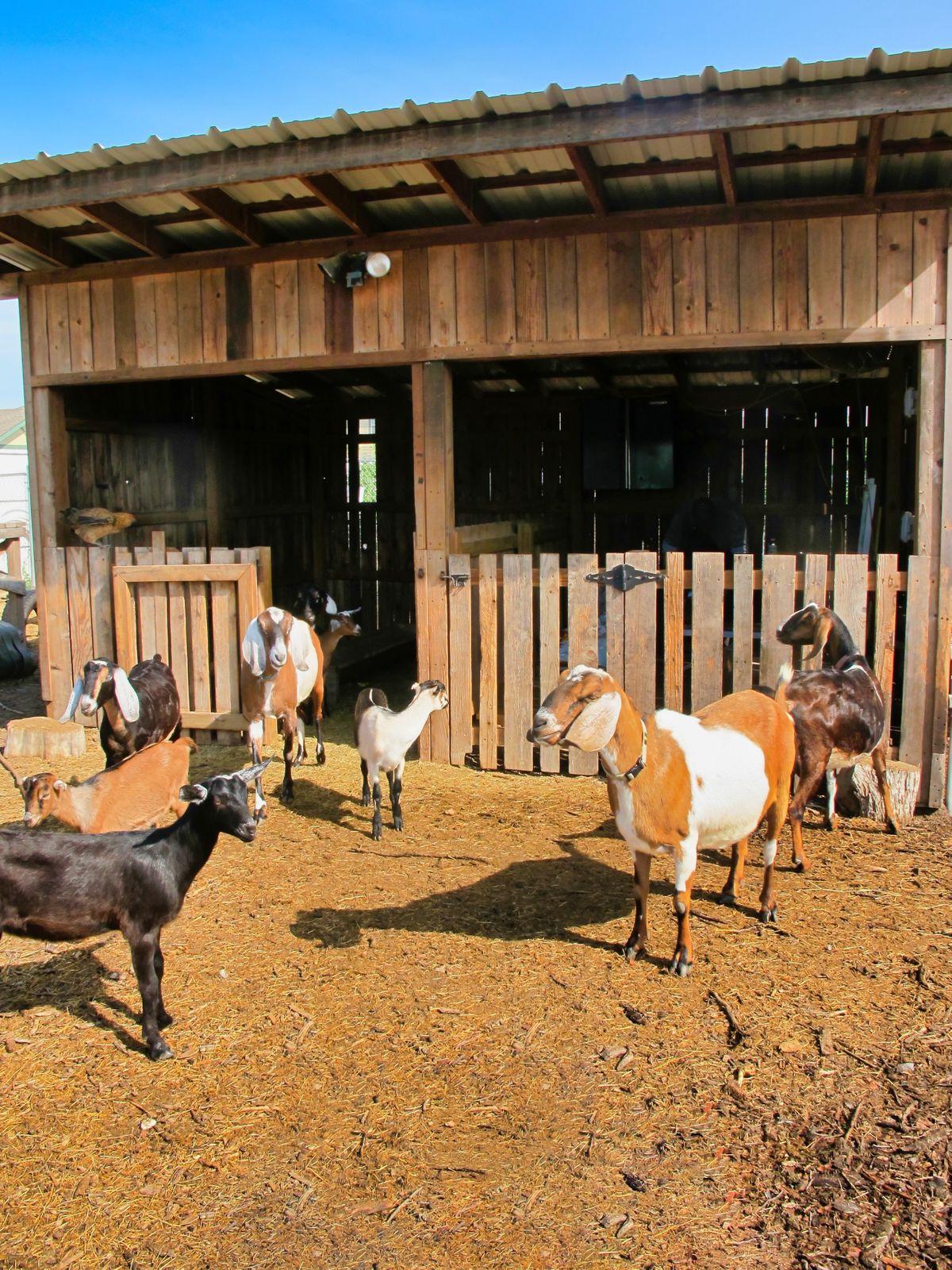 Bonton Farms Photo Video Shoot Location Dallas 22.jpeg