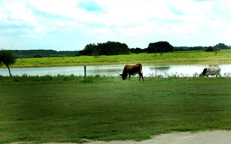 1r18_animals_ranch_north_rio_vista_00.jpg