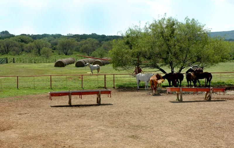 1r16_animals_ranch_north_rio_vista_00.jpg
