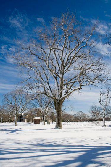 6_0_1065_1t16X24_Tree_cladj_254dpi.jpg