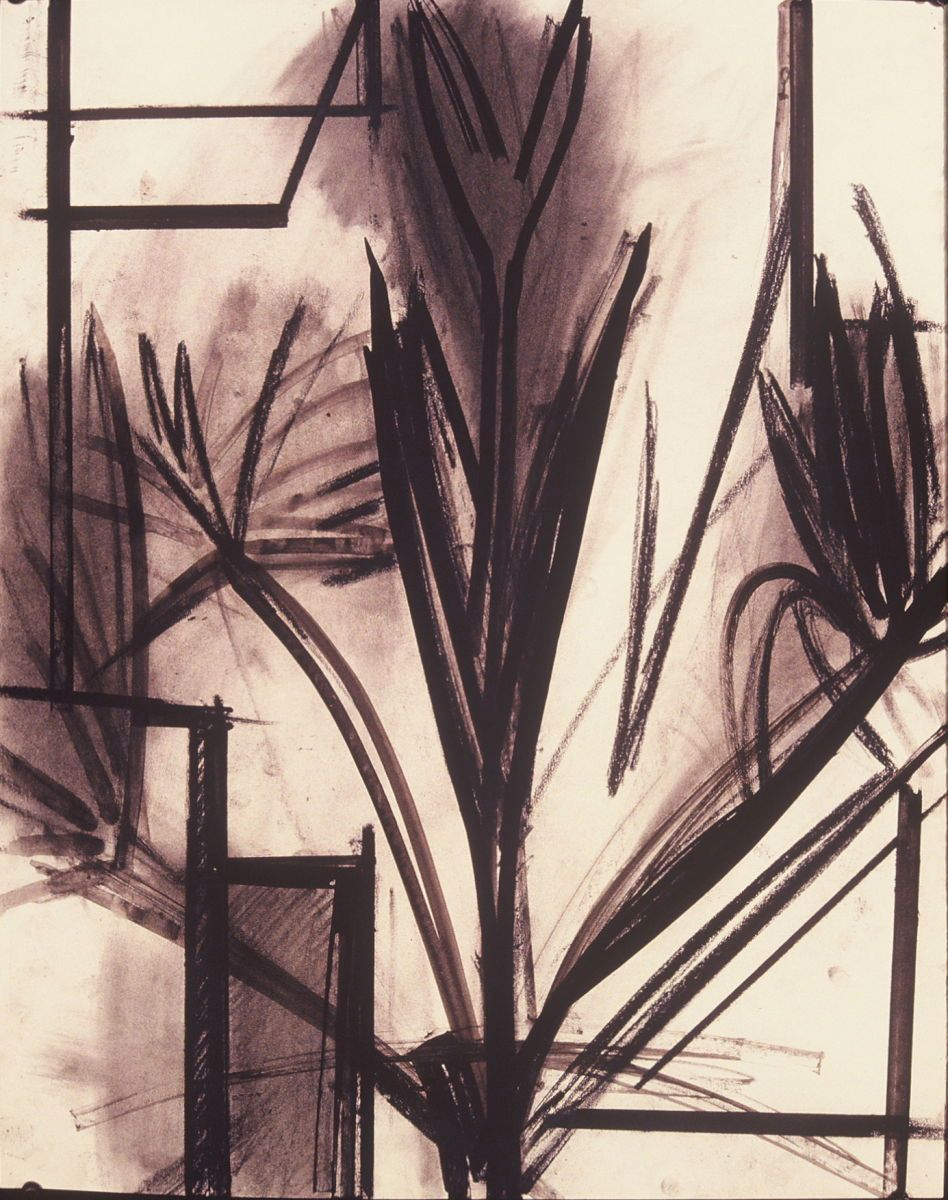 "PALM TREE     1972 Berkeley 24 x 19"" , ink and charcoal on paper"