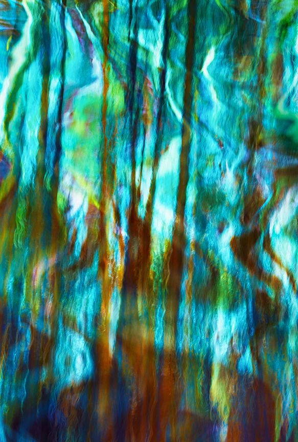 Viridian-Forest-27X40.jpg