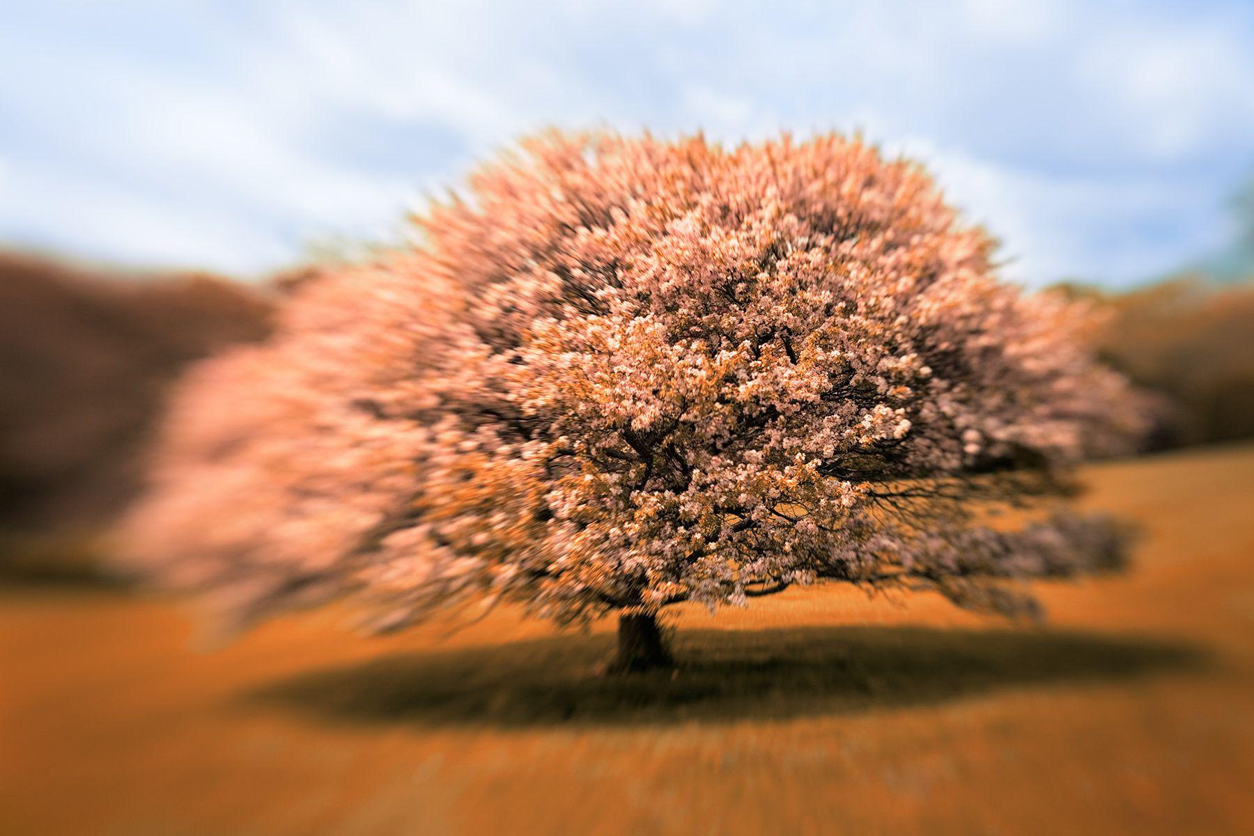 10228_whit_park_infrared.jpg