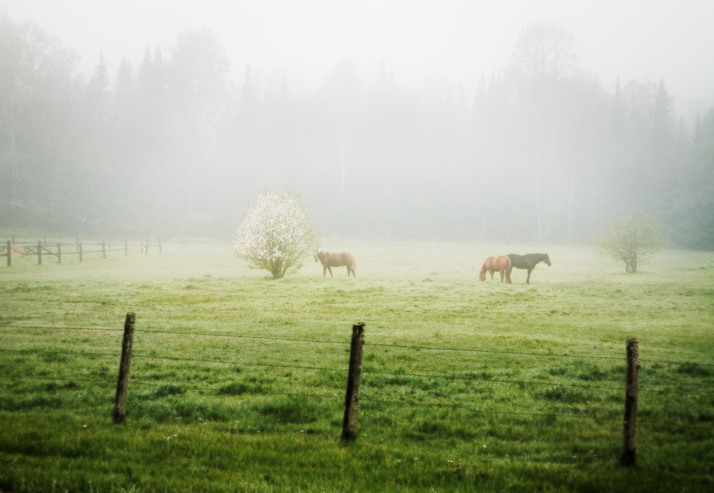 10302_horses_forest_co.jpg