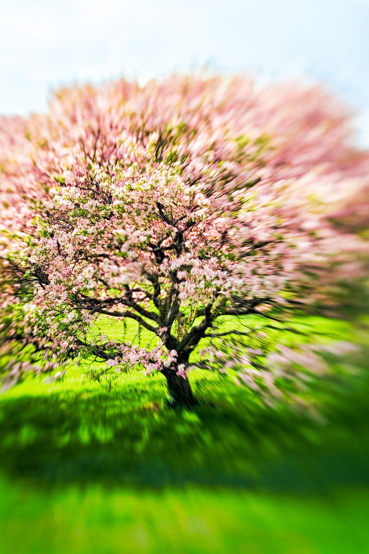 10264_tree_park.jpg