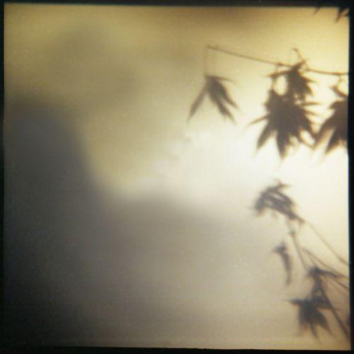 1diana_leaves.jpg