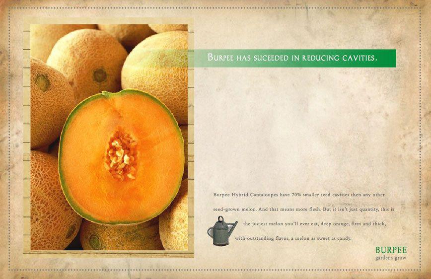 Burpee Seeds2