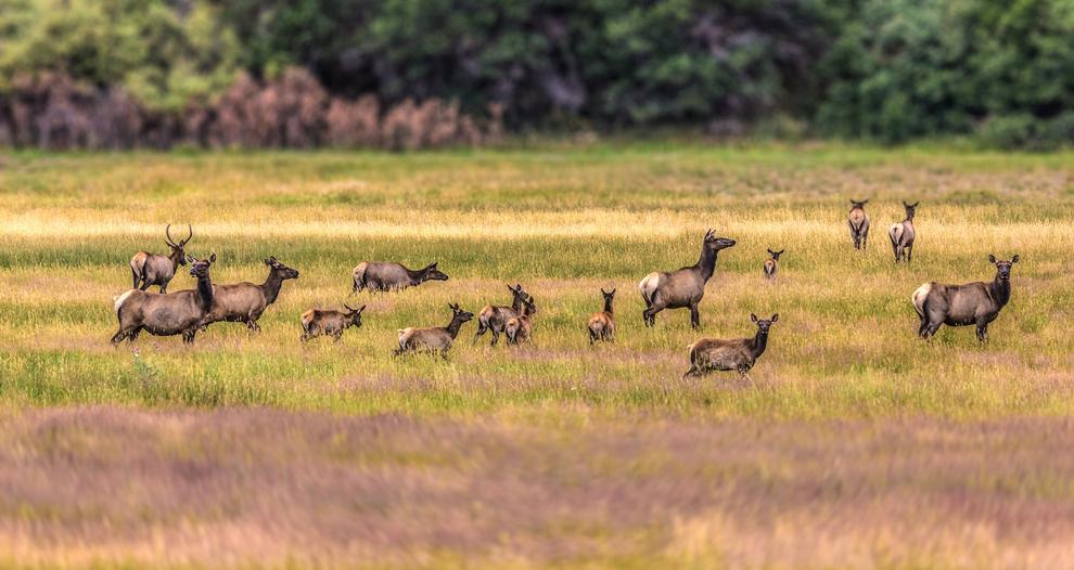 wildlife-photography, travel-photographer