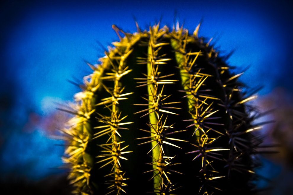 cactus_in_desert_in_cobo_mexico, resort photography