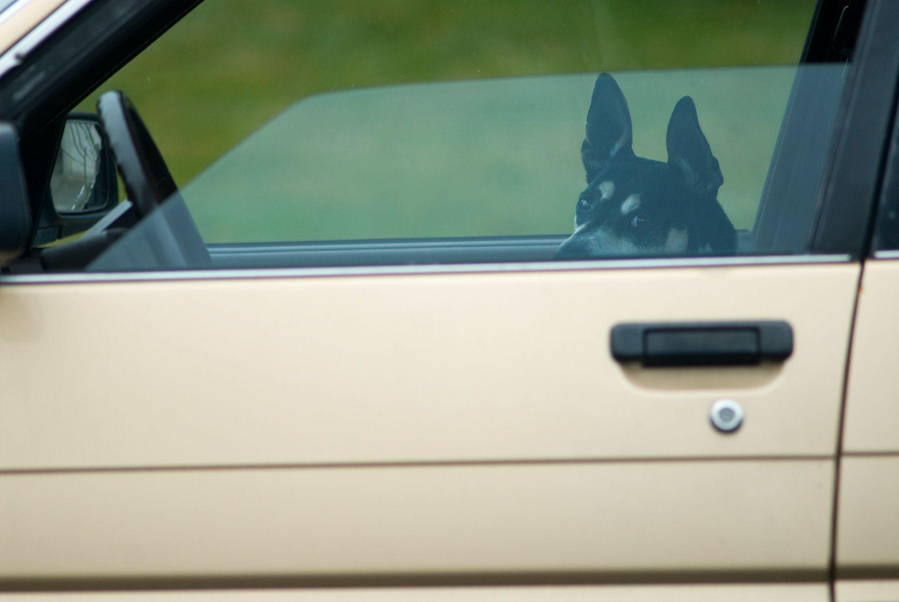1web_dog_driving_copy_2.jpg