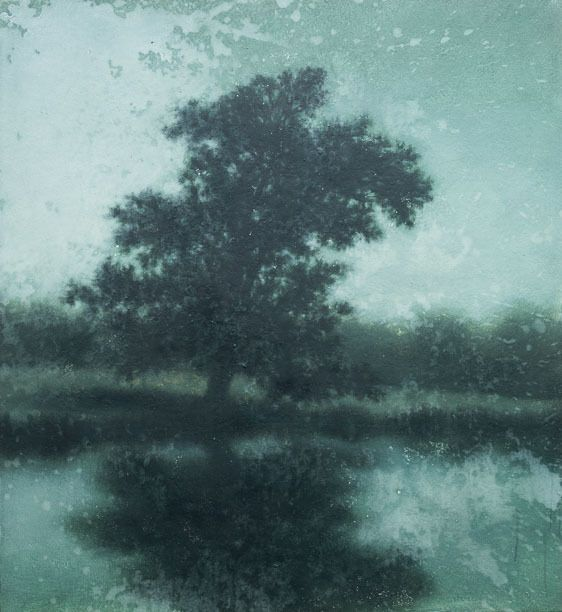 sycamore on the river