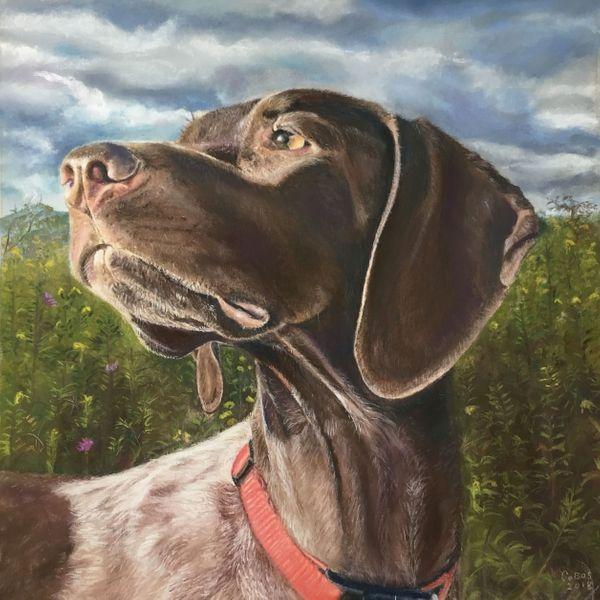 Field Dog
