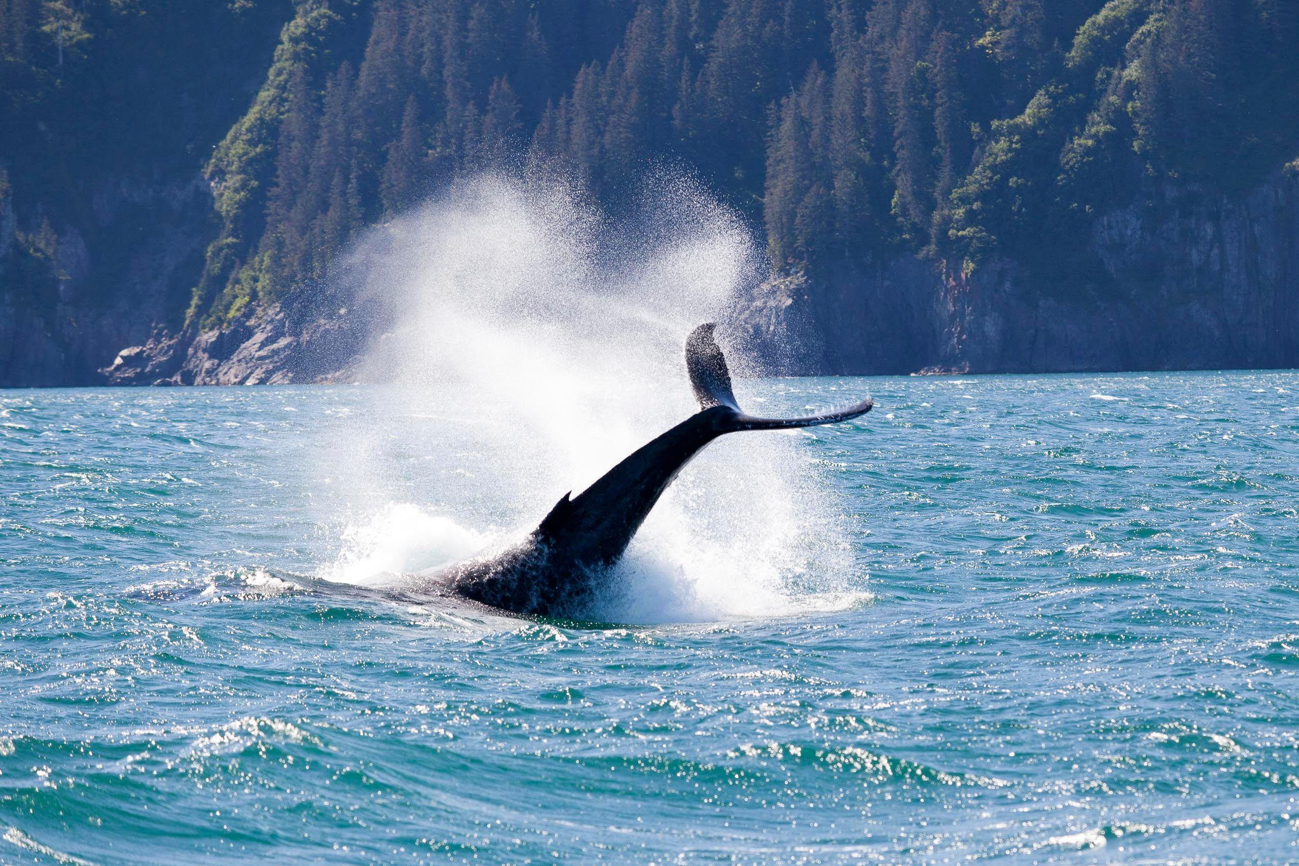 alaska_whale_seward.jpg