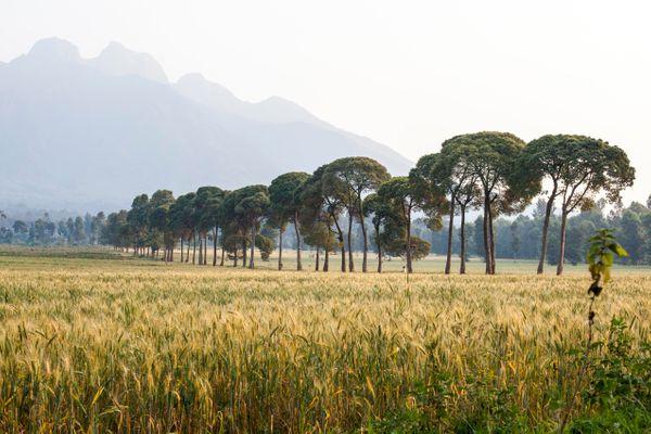 rwanda_volcanoes_national_park.jpg